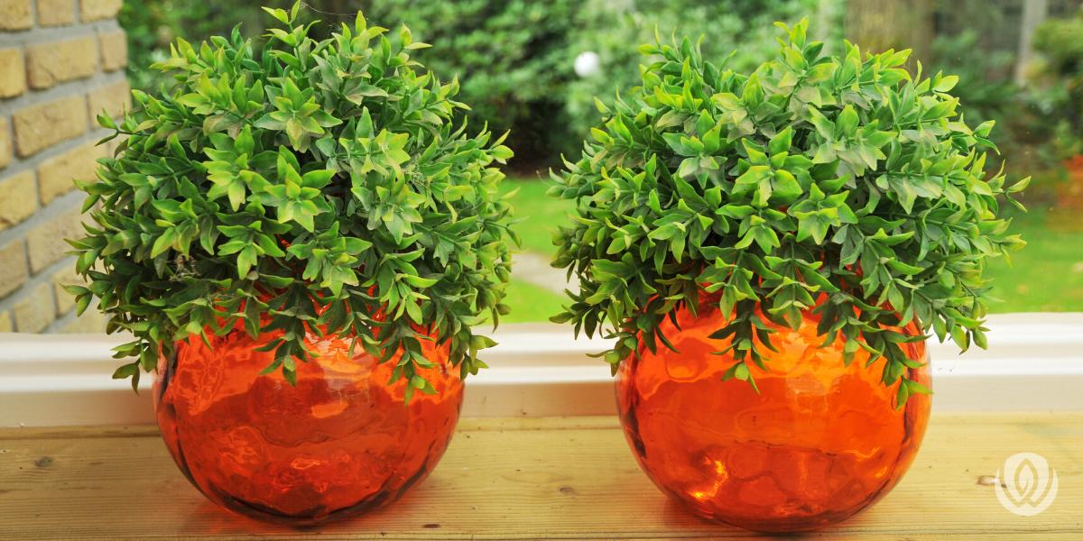 simple-landscaping-Ideas-plants-in-pots