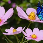 beneficial-insects
