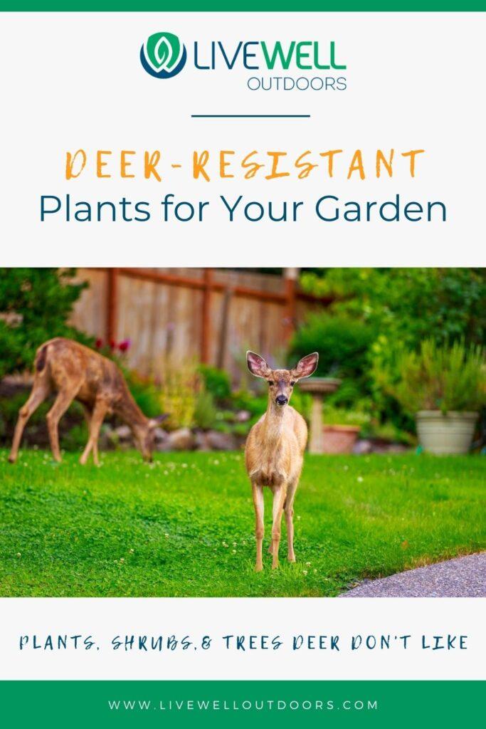 deer-resistant-plants-livewelloutdoors.com