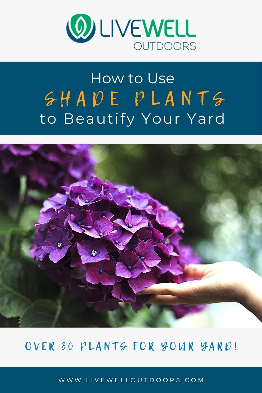 shade-plants
