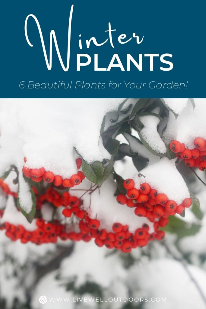 winter-interest-plants