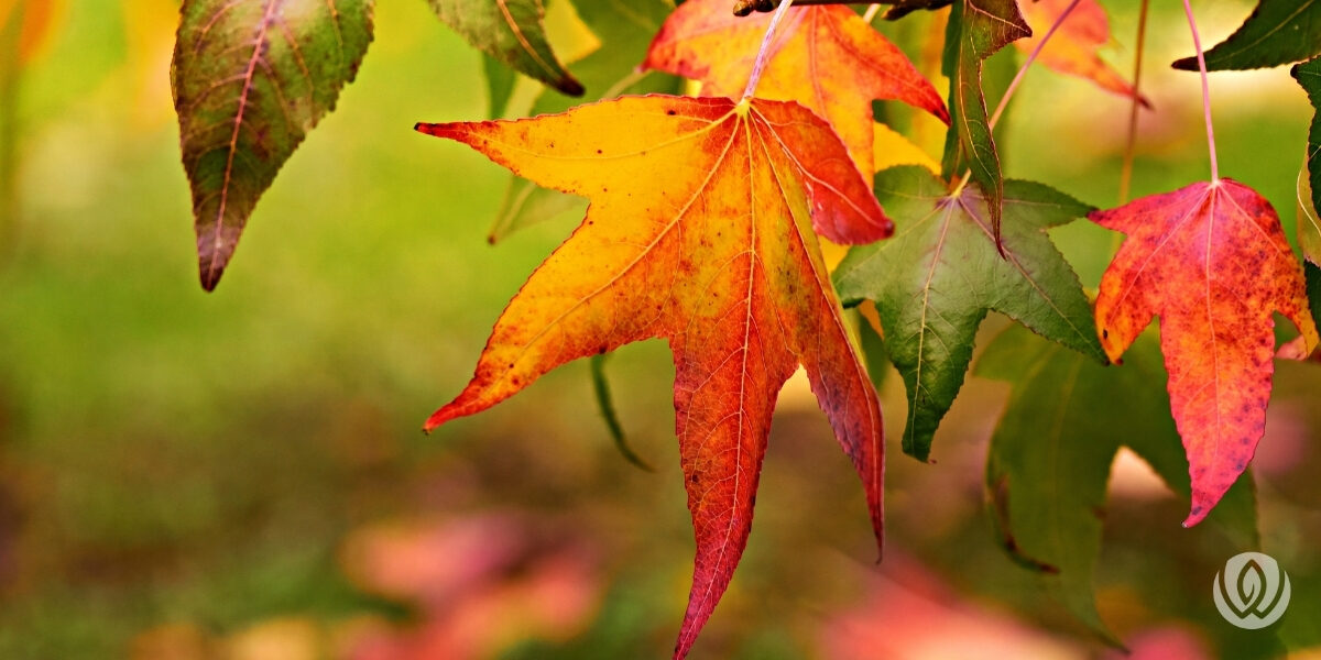 fall-landscaping-tips