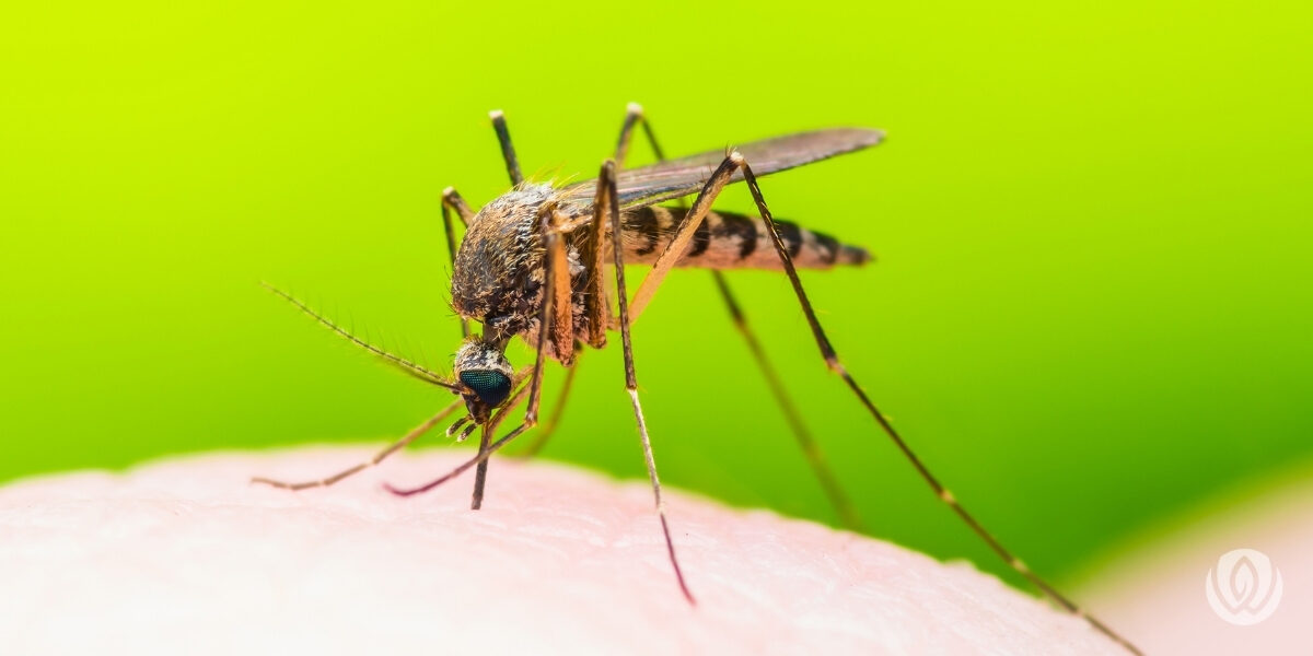 Mosquitoes-FAQs