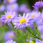 Lush-Summer-Landscaping-Tips